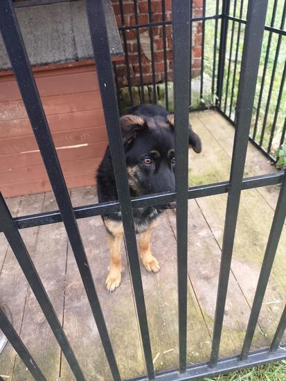 Galeria Bezdomny pies szuka właściciela